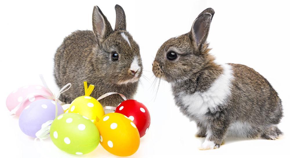 教兔兔用滚珠饮水器喝水的方法