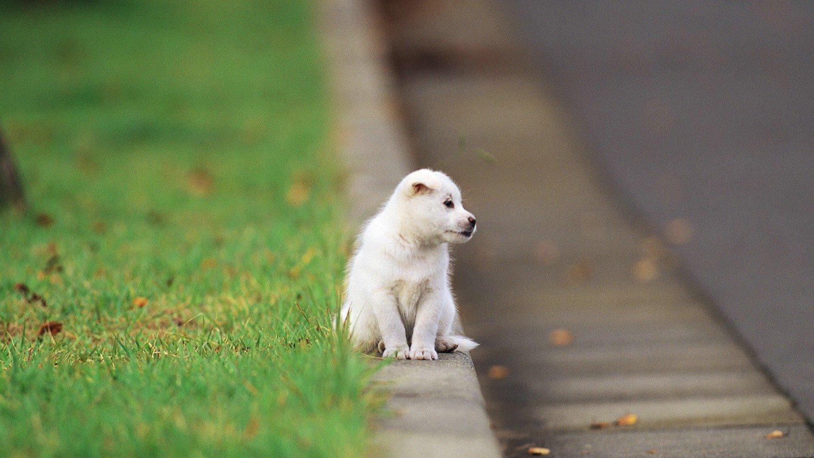 如何判断狗狗是否健康?